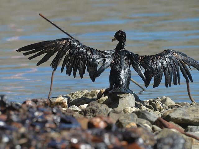uccello-petrolio ok